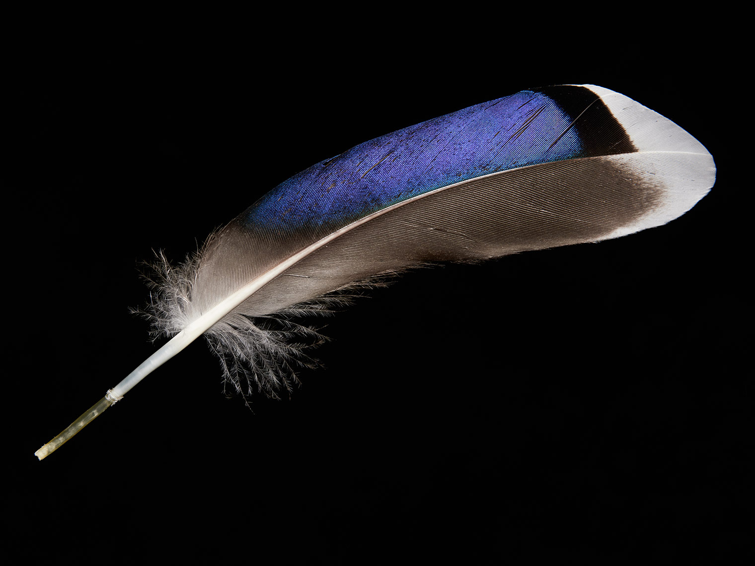 feather-0001-web