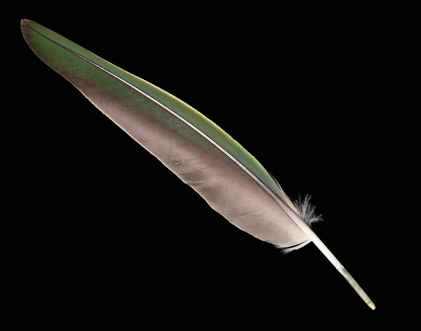 feather-0055-web