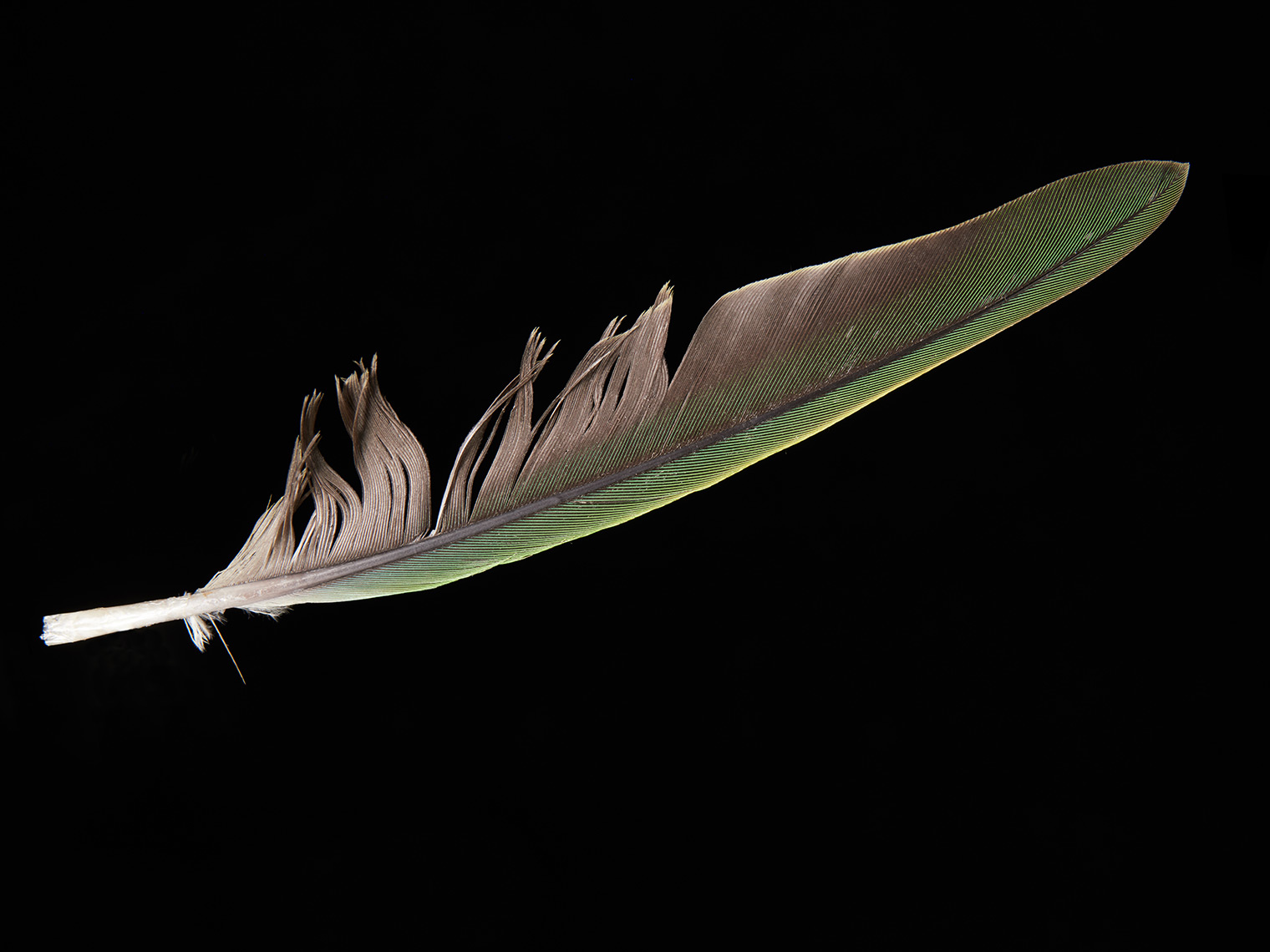 feather-18273-web