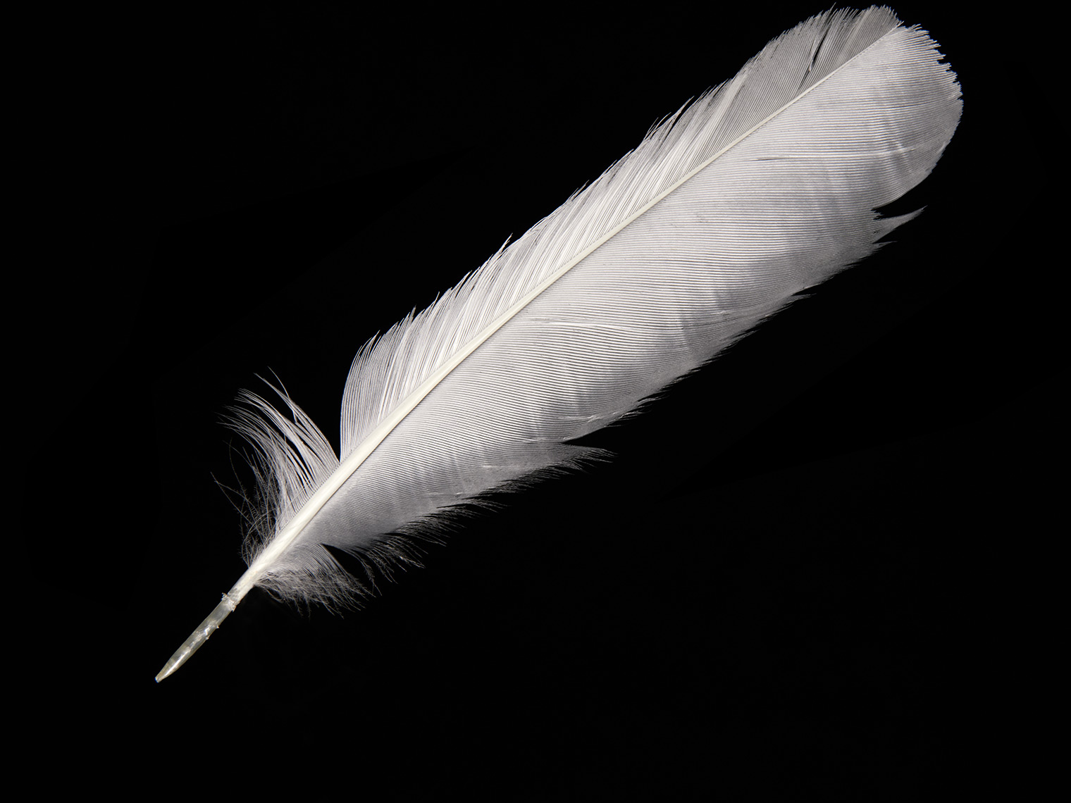 feather-18275-web