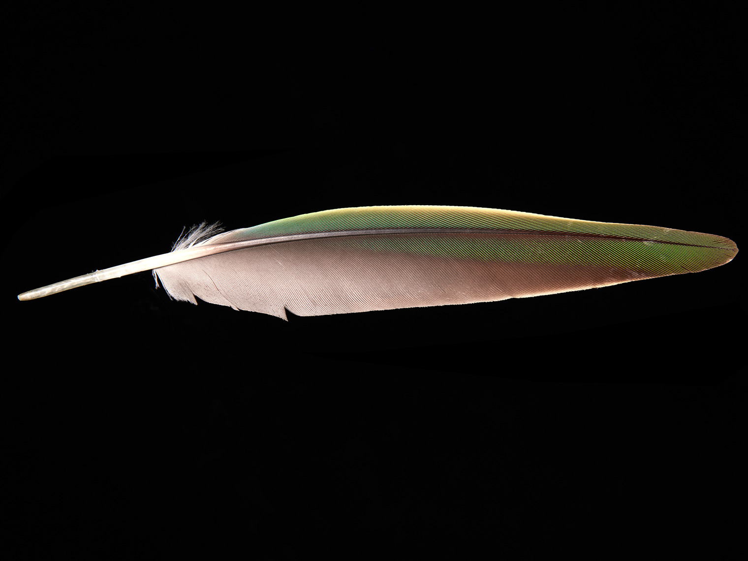 feather-18277-web
