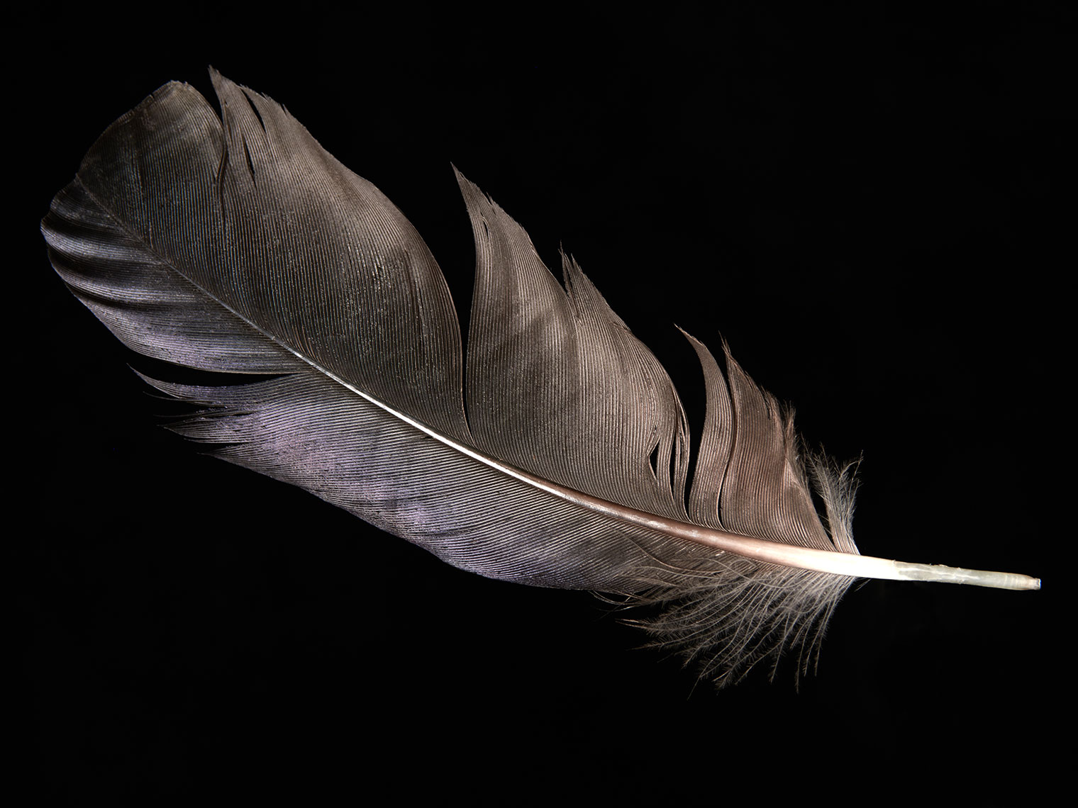 feather-18281-web