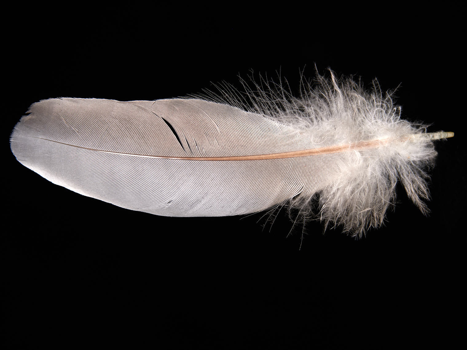 feather-18285-web