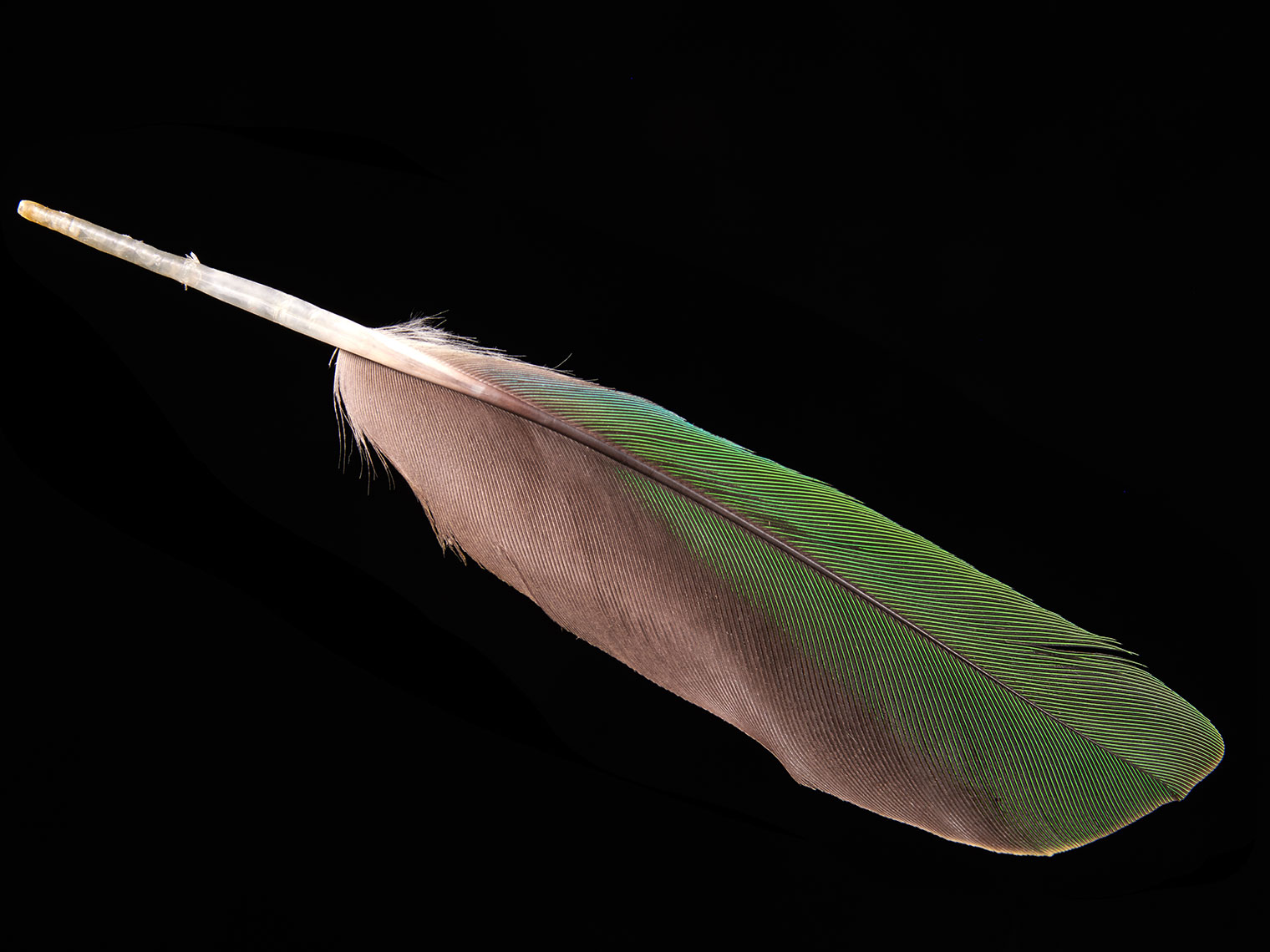 feather-18291-web