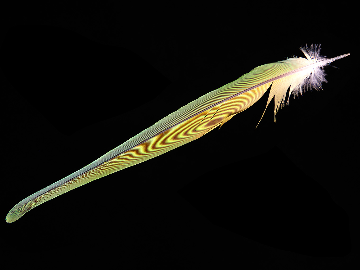feather-18293-web