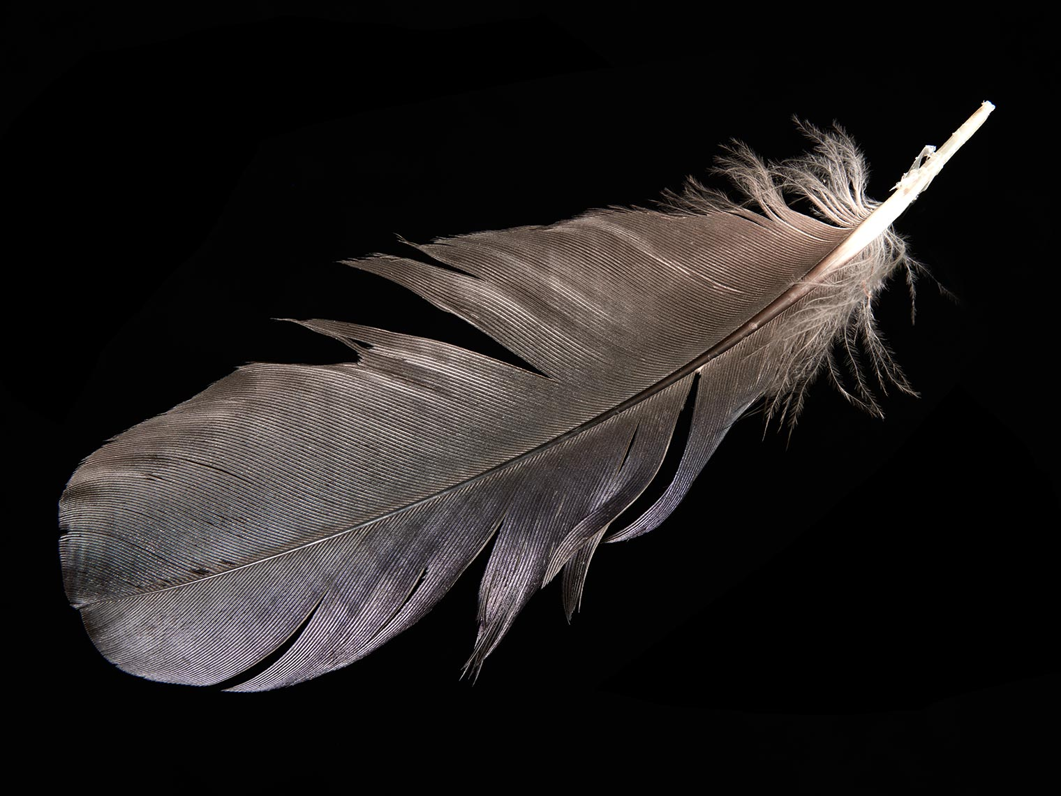 feather-18294-web