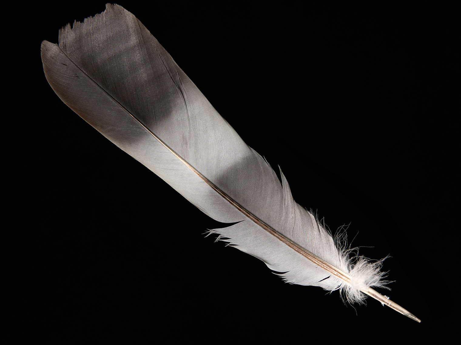 feather-18296-web