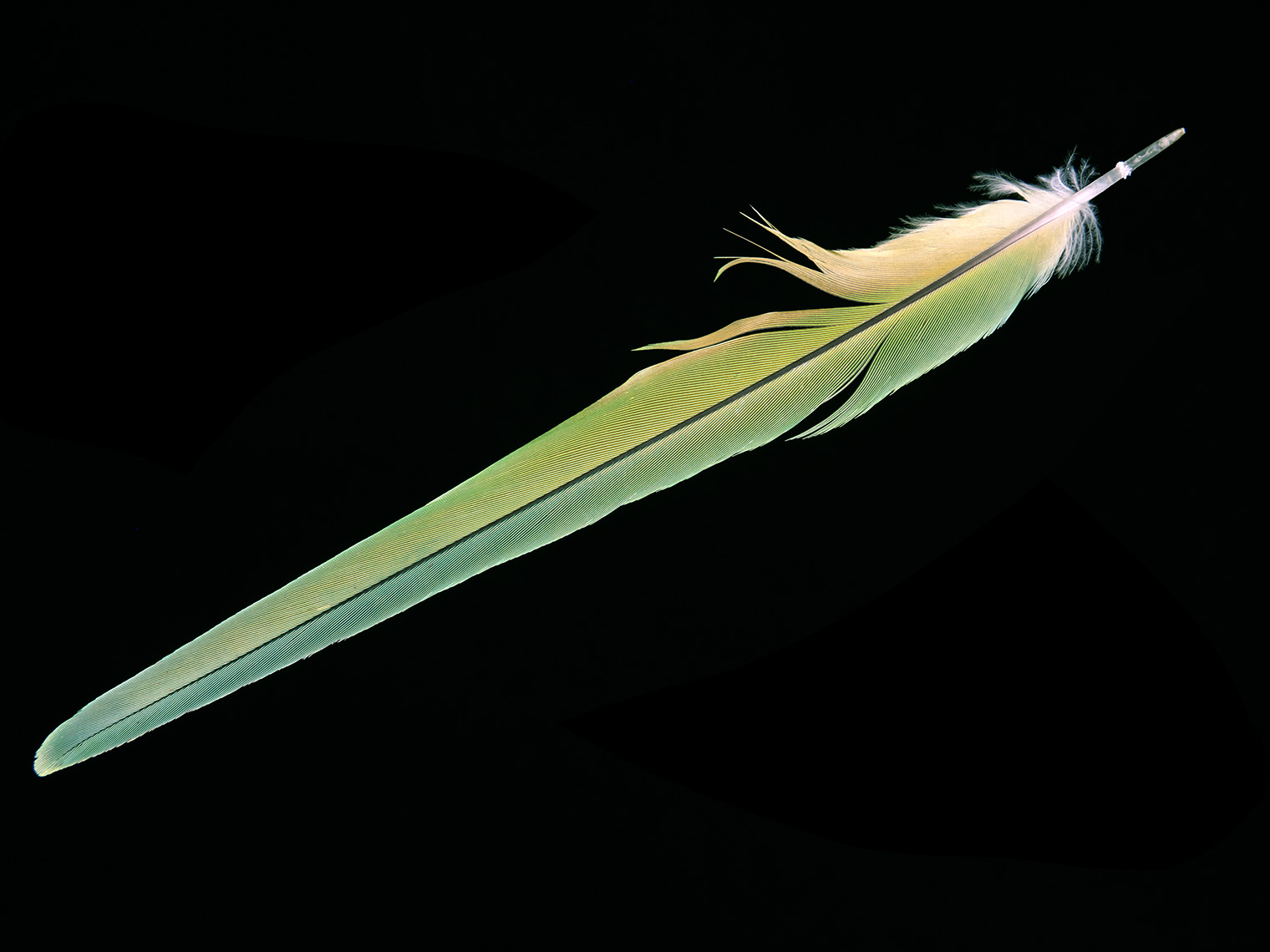 feather-18297-web