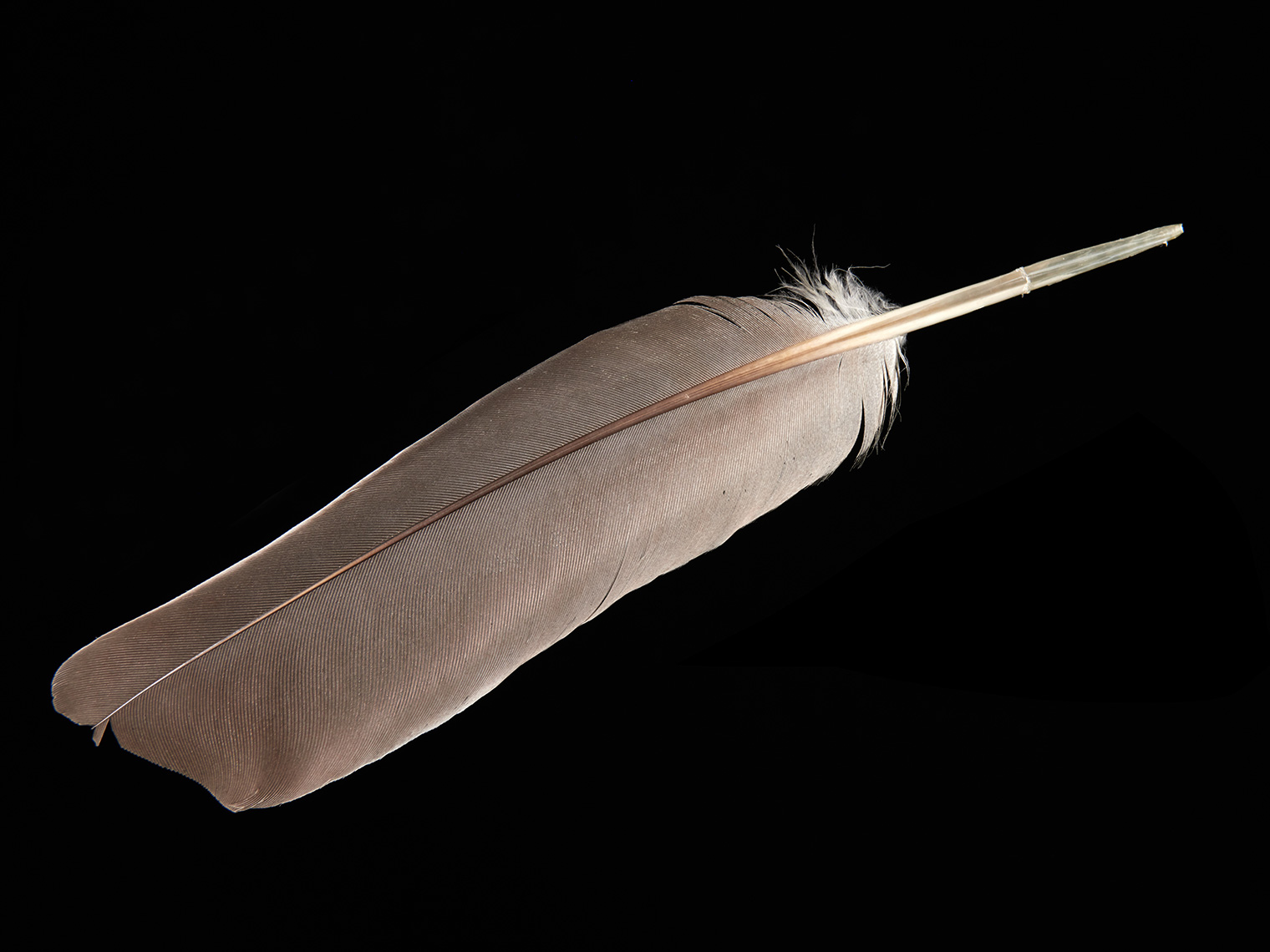 feather-18298-web