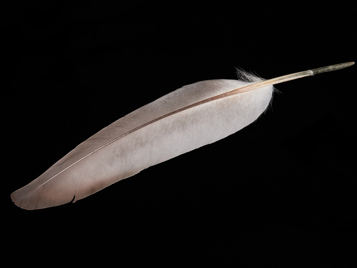 feather-18299-web
