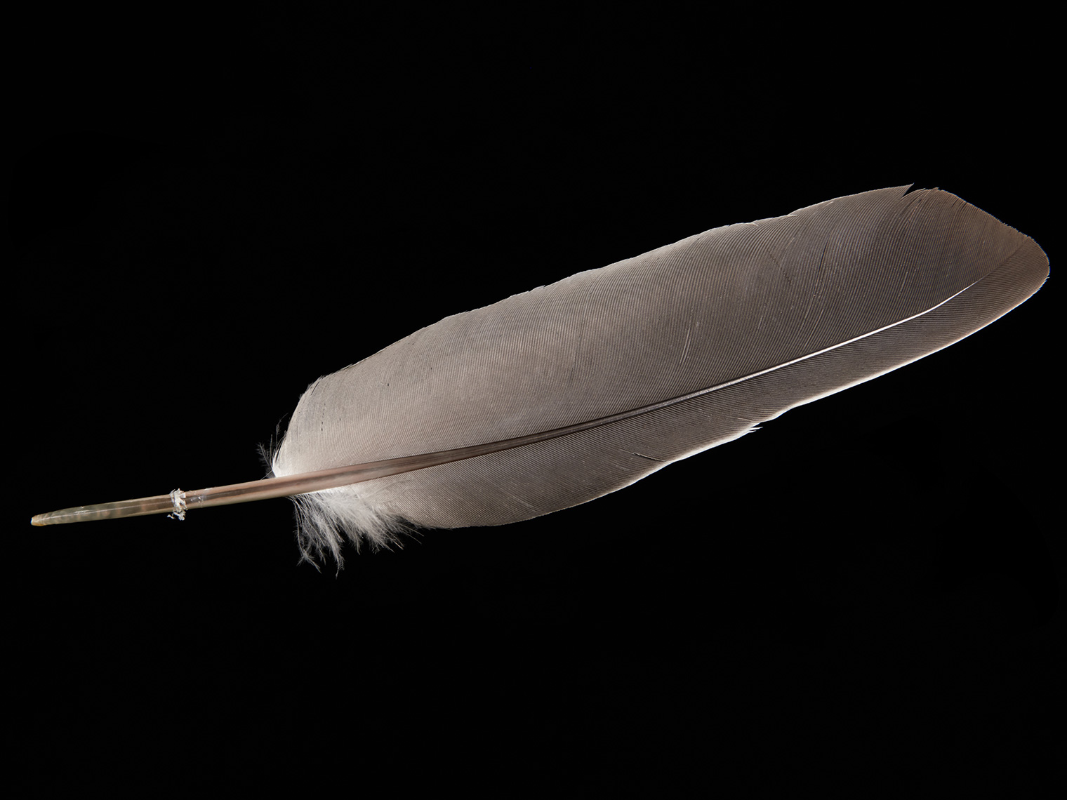 feather-18301-web