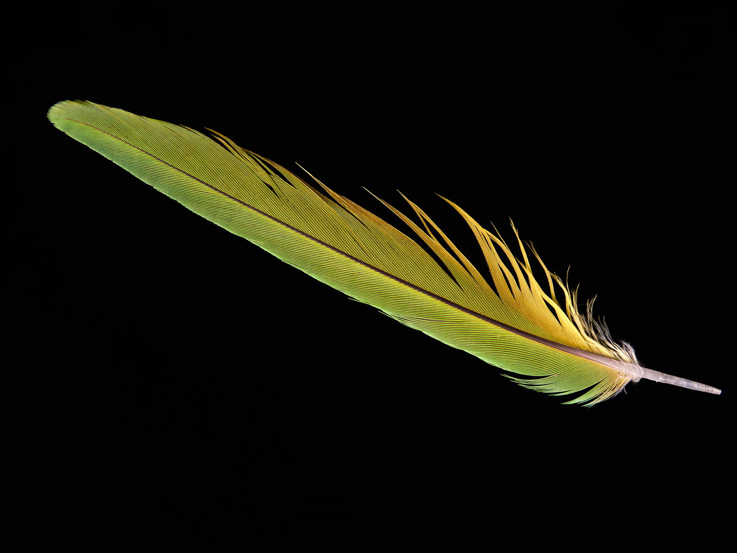 feather-18302-web