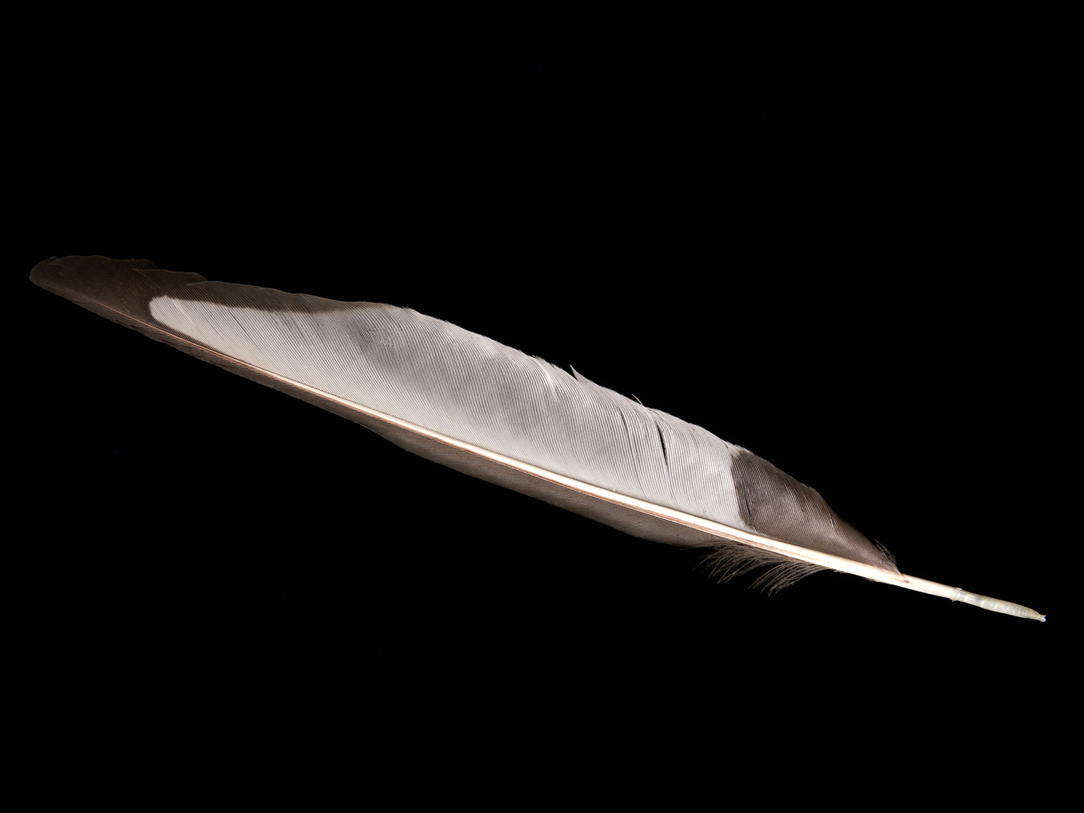 feather-18305-web