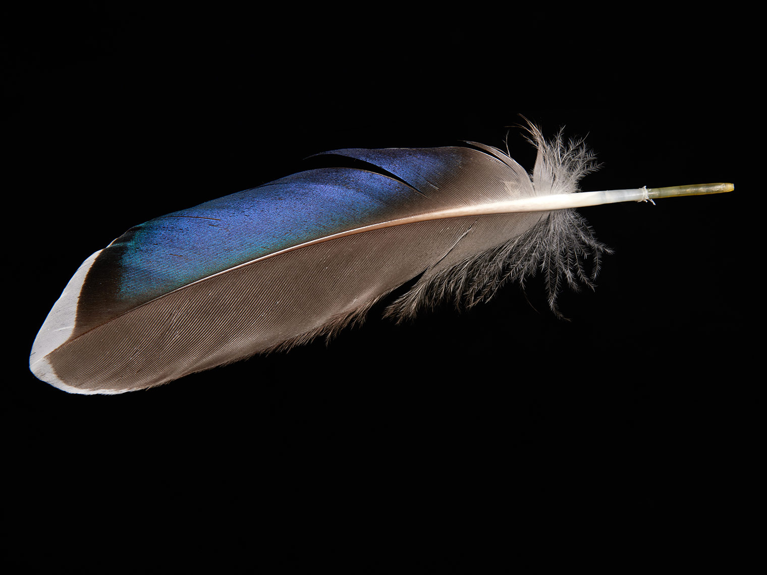 feather-18306-web