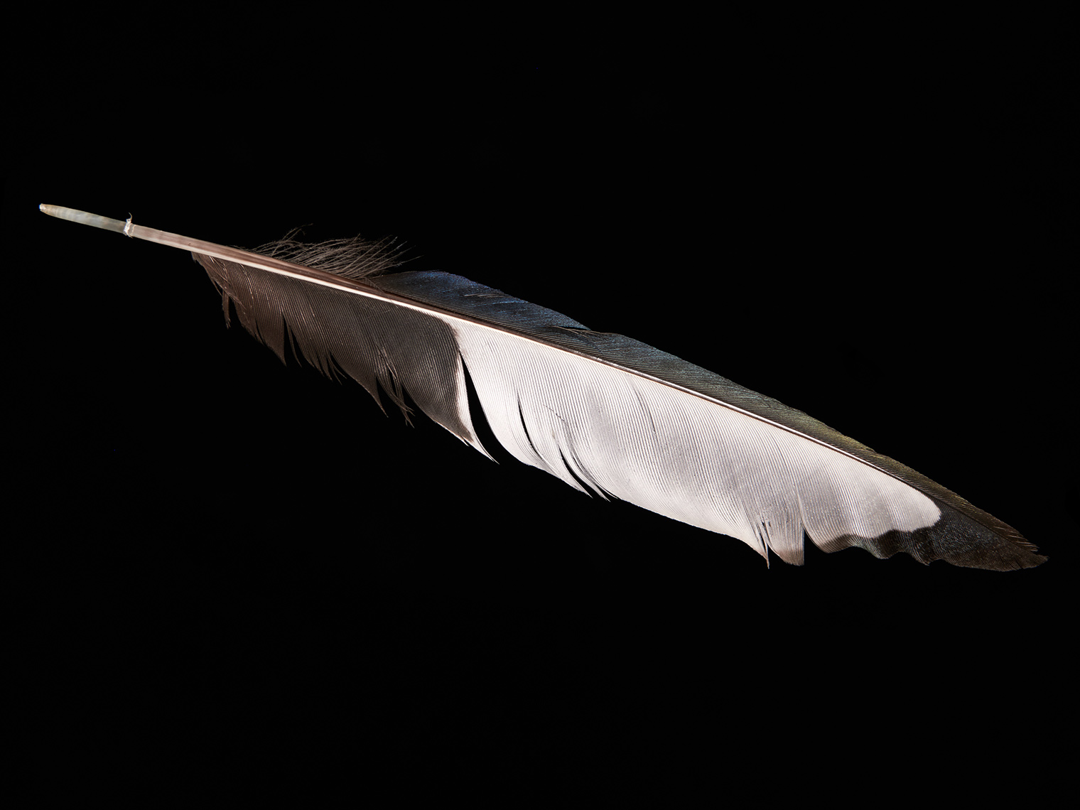 feather-18313-web