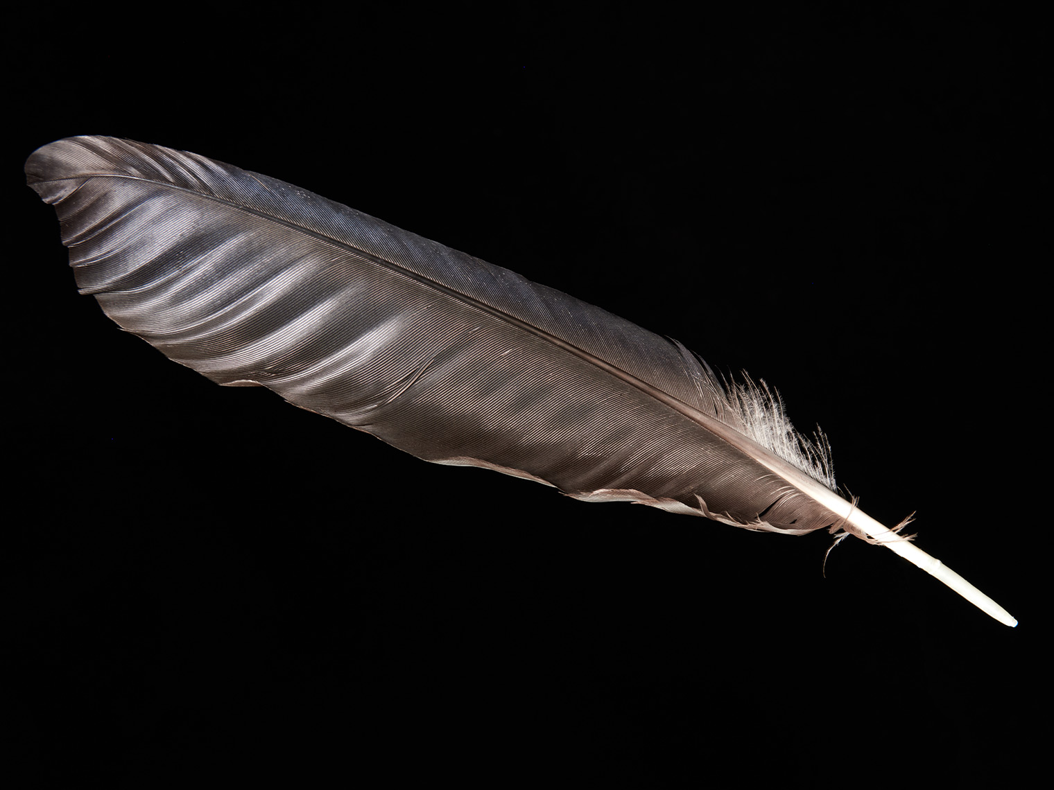 feather-18315-web