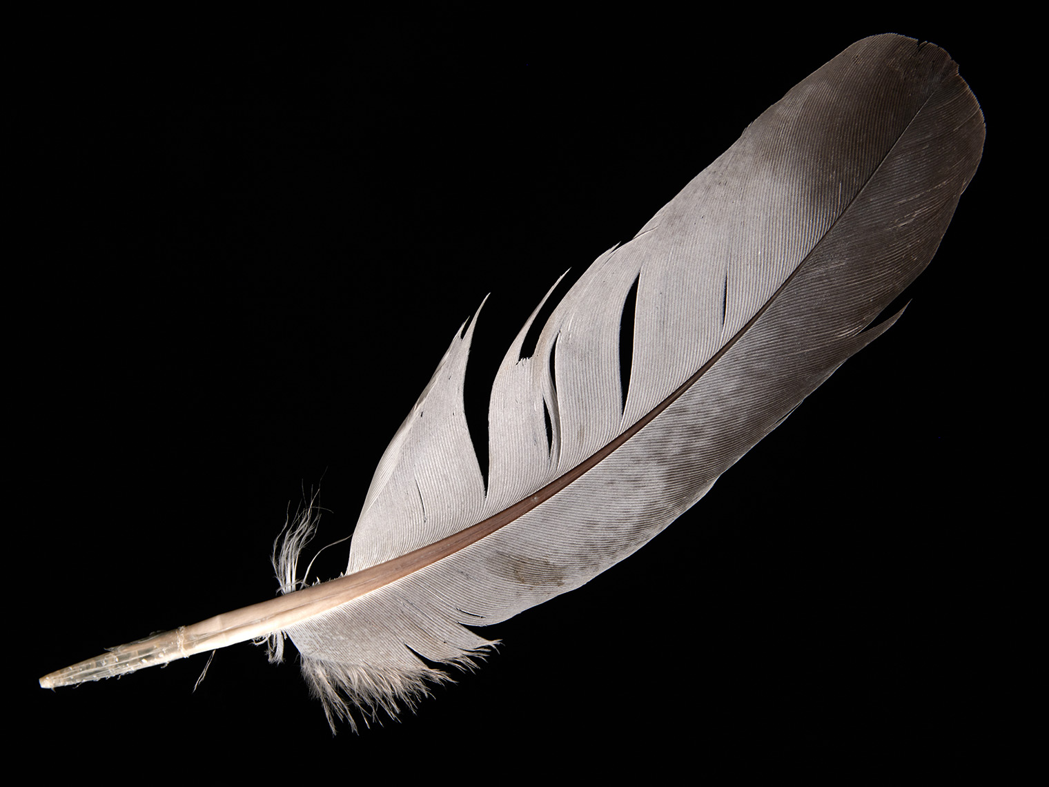 feather-18316-web